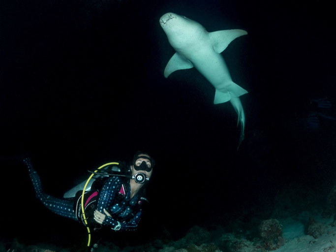 night diving with sharks maldlives