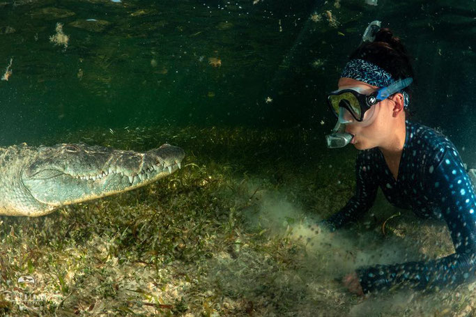 diving with crocs in mexcio