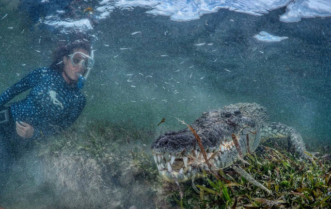 Swimming with wild Saltwater Crocodiles in Mexico  Would you