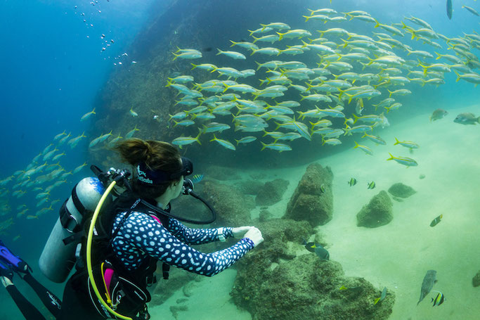scuba diving los cabos