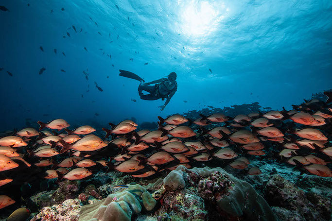 Diving with a school of fish in Maldives | Photo by Simon Lorenz