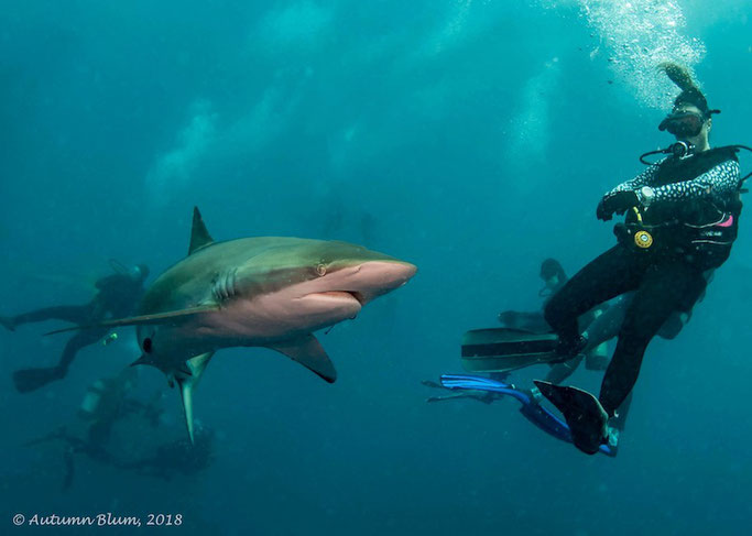 shark diving in florida