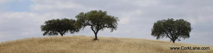 CorkLane_Korkbäume_Portugal