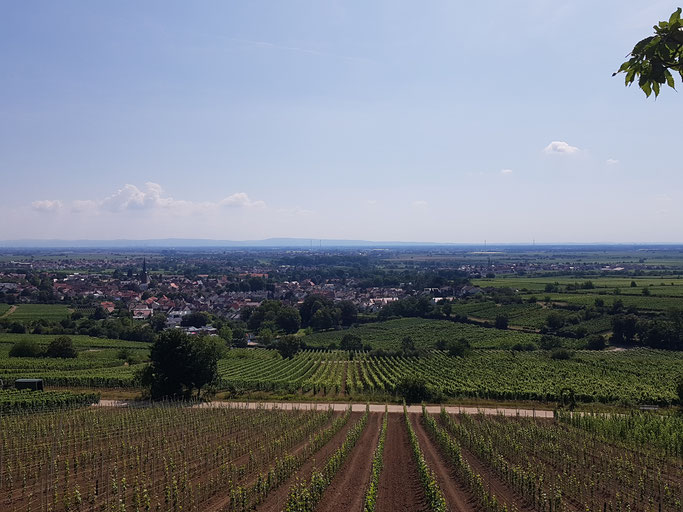 Blick über Deidesheim und die Pfälzer Rheinebene