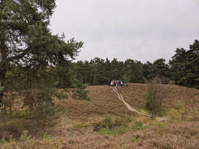 Wandern auf den Nordpfaden durch die Heide Wolfsgrund bei Eversen, unweit Rotenburg Wümme