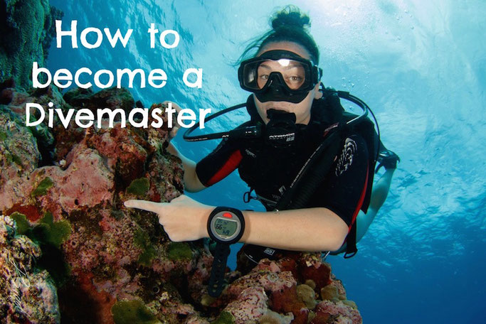 what do you need to be a dive master?