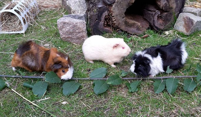 Mattis, Luna und Oreo