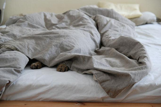 Bettdecken waschen & pflegen - Tipps vom Profi