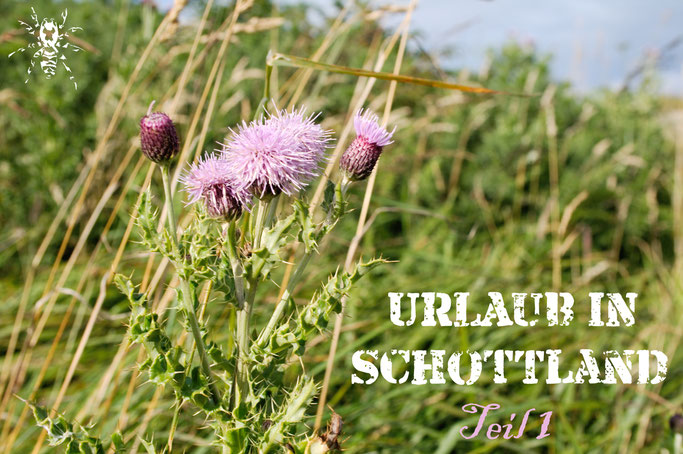 Urlaub in Schottland Teil 1 - Urlaubsfotos Distel - Zebraspider DIY Anti-Fashion Blog