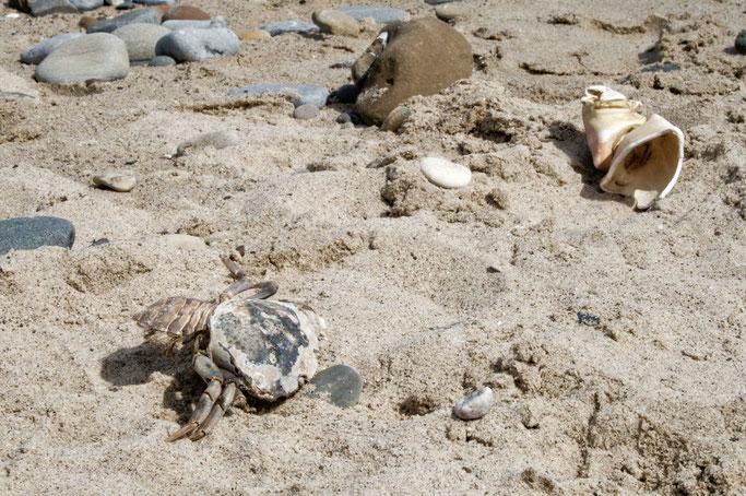 Strandgut und andere Fundstücke - Krebstier Überreste - Zebraspider DIY Anti-Fashion Blog