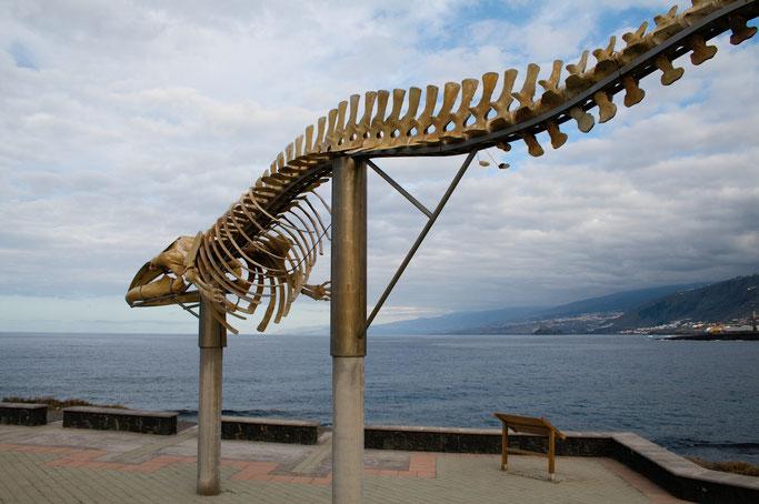 Leben und Vergehen - Teneriffa Fotos - Walskelett an der Küste - Zebraspider DIY Anti-Fashion Blog