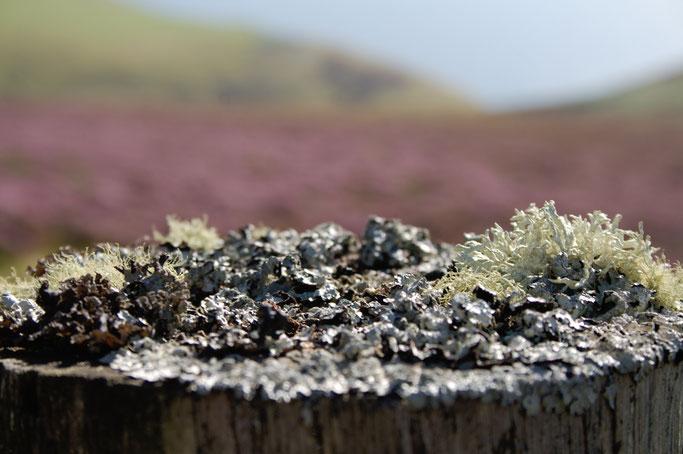 Urlaub Orkney Inseln - Flechten Biotop - Zebraspider DIY Anti-Fashion Blog