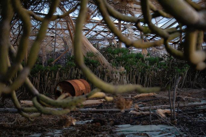 Leben und Vergehen - Teneriffa Fotos - Drachenbäume und Ölfass - Zebraspider DIY Anti-Fashion Blog