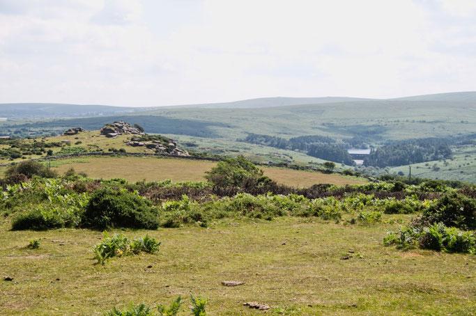 Zum Urlaub nach Cornwall - Dartmoor Ausblick - Zebraspider DIY Anti-Fashion Blog