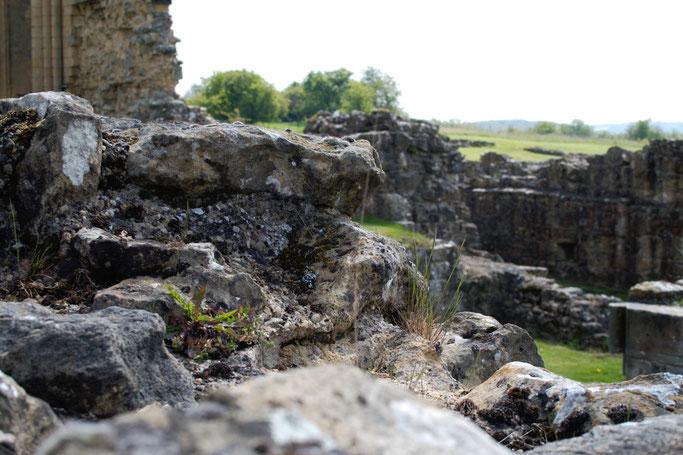 Die Ruinen der Bylands Abbey - Steine und Pflanzen - Zebraspider DIY Anti-Fashion Blog