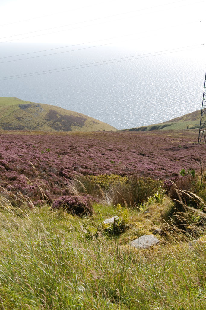Urlaub Orkney Inseln - Heide und Meer - Zebraspider DIY Anti-Fashion Blog