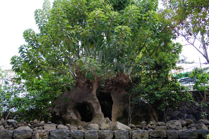 Leben und Vergehen - Teneriffa Fotos - botanischer Garten - Zebraspider DIY Anti-Fashion Blog