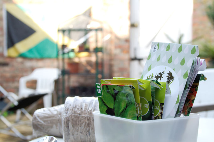 Mein englischer Garten - Gewächshaus und Samen - Zebraspider DIY Anti-Fashion Blog