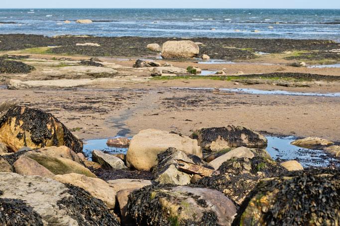 Robin Hood's Bay - Strandfotos und -Outfit - Strand mit Felsen und Algen - Zebraspider DIY Anti-Fashion Blog