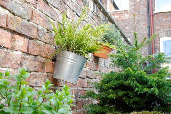 Mein englischer Garten - Minze, Farn und Tannenbaum - Zebraspider DIY Anti-Fashion Blog