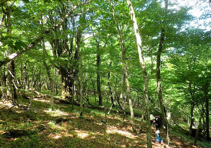 大室山原生林