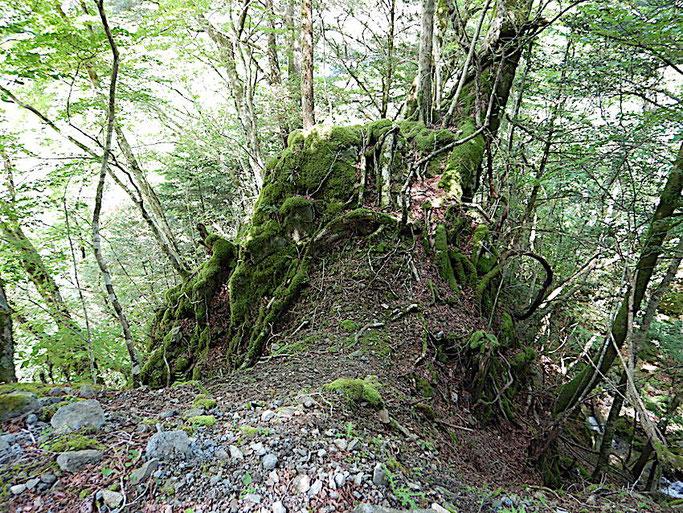 上から見たナマコ岩