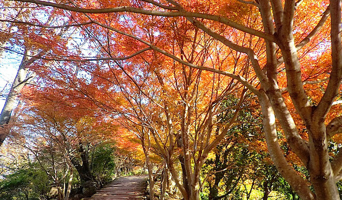 葛城山山頂の紅葉