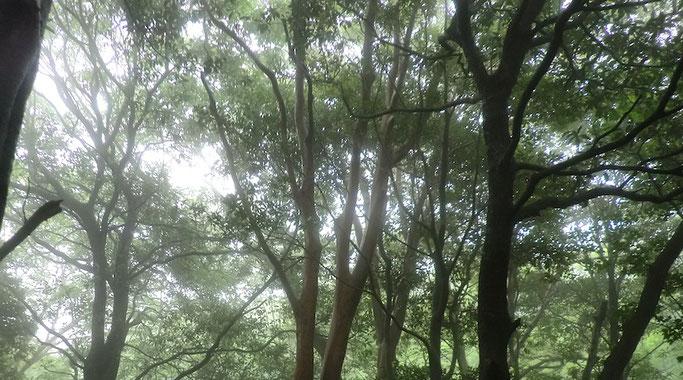 函南原生林  (6月29日)