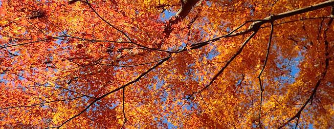 雄飛滝の紅葉