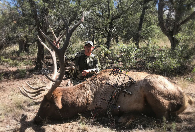 Gila Bull Elk