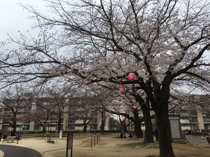 足立区,不動産,花畑公園,桜