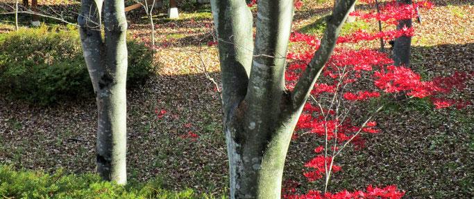 ゆと森倶楽部の中庭。まだ紅葉が残っていました