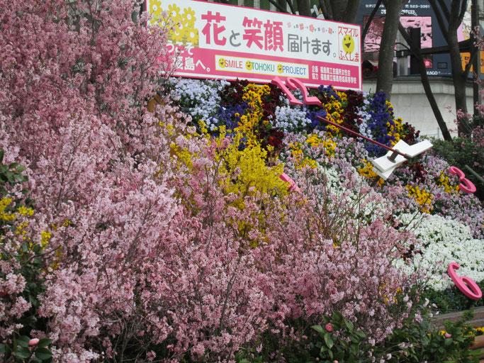 4月8日 福島駅東口広場の花時計…花に埋もれています。