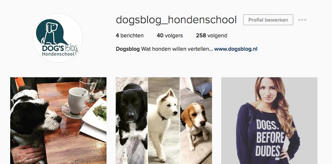 Instagram Dogsblog