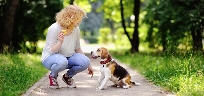 Hondenschool Nunspeet Harderwijk puppycursus honden opvoeding gehoorzaamheid
