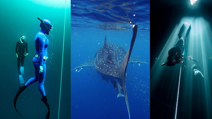 freediving trip