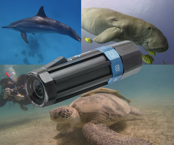 Paralenz dive camera review