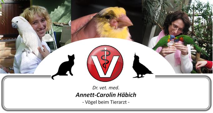 Vogelkundiger Tierarzt - Tierarztpraxis Häbich - Ansprechpartner: Wellensittich, Kanarienvogel, Fink, Papagei, Taube, Huhn, Beizvogel, etc.