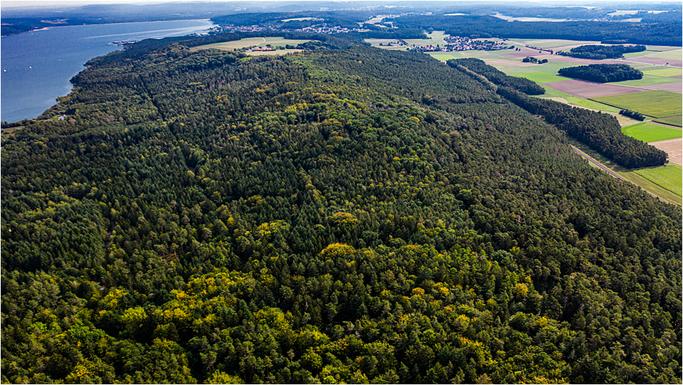 Muna-Wald Richtung Osten