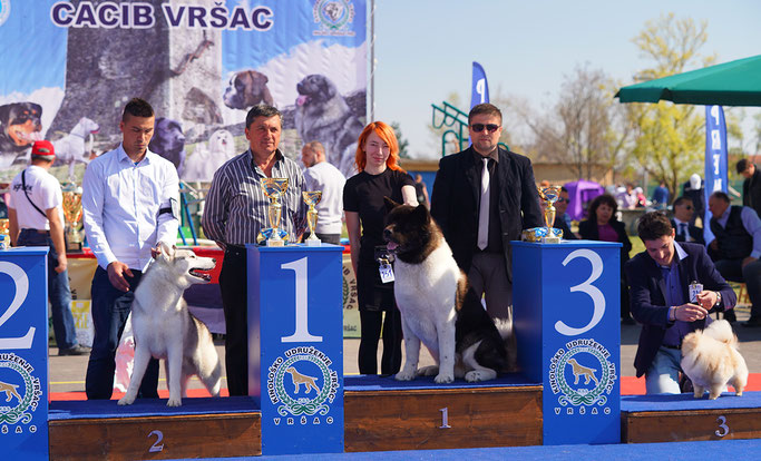 #NDS #FCI-dogs #pedigree #akitabreeder #almightykennel #dogphoto #bestdogsphoto #IDS #nationaldogshow #internationaldogshow #interchampion #CIB #champion #almightydog #cac #cacib #superdog #superpuppy #findpuppy #searchbestpuppy #kingakita #loveakita