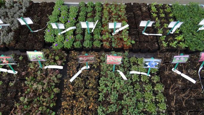 vaste planten actie tafels