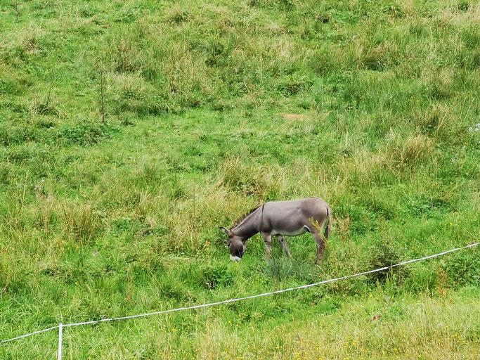 Der Esel Jakob
