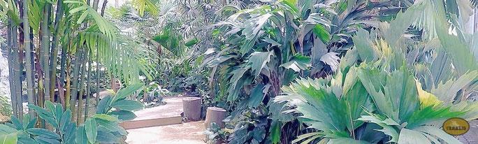Botanischer Garten Chiang Mai