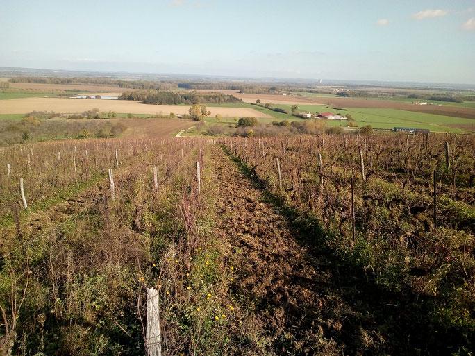 Bruley 2017 AOC Vins des Côtes de Toul Jan Tailler L'arbre Viké Bulligny Lorraine