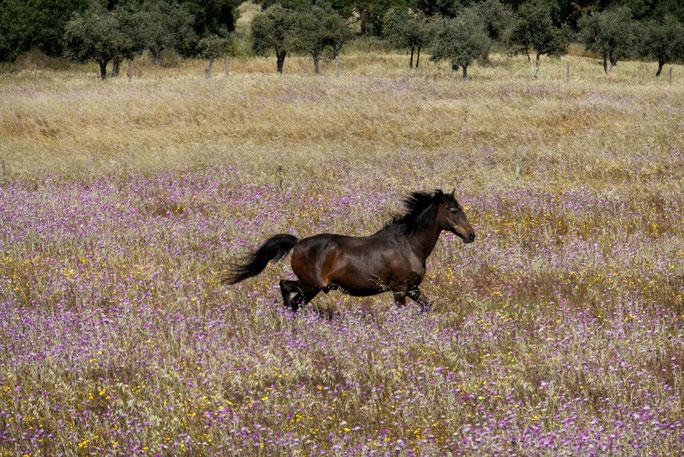 Évora - Die Natur in der Umgebung lädt zu schönen Spaziergängen ein