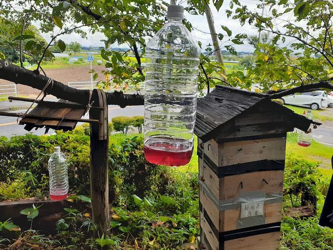 巣箱の周りに設置したスズメバチトラップ。美味しそうな甘い香りが漂って、他の虫まで寄ってきそう。