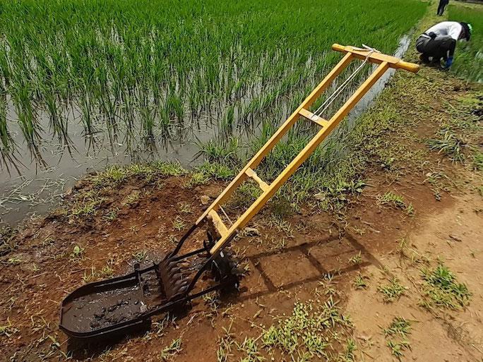 手押しタイプの水田中耕除草機。黄色いボディが愛くるしい。