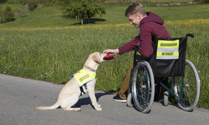 Assistenzhundezentrum, beste Hundeschule in Vorarlberg, Hunde die behinderten helfen