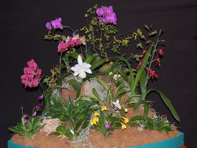 A Balanced Display of more than Three Orchids