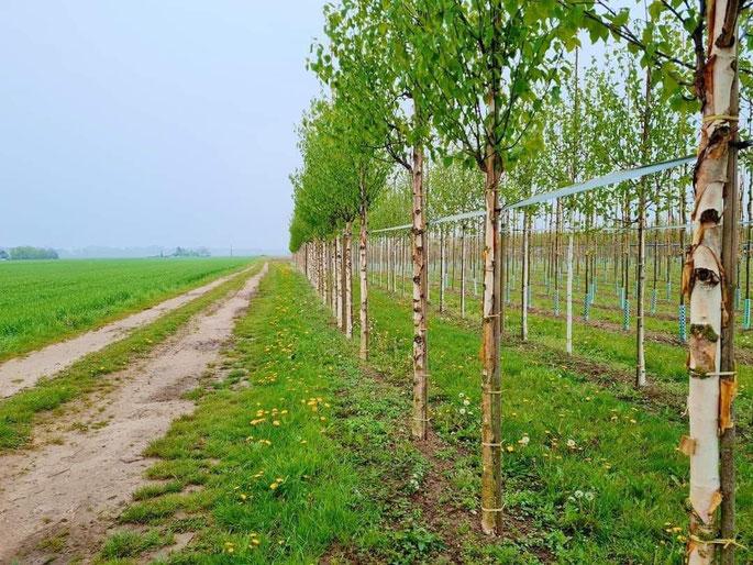 Feldwege am Niederrhein @wandelsinn